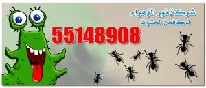 anti insects kuwait